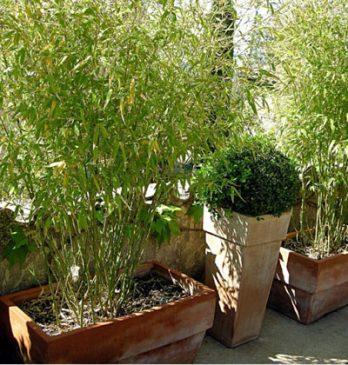 bac bambou vis a vis terrasse